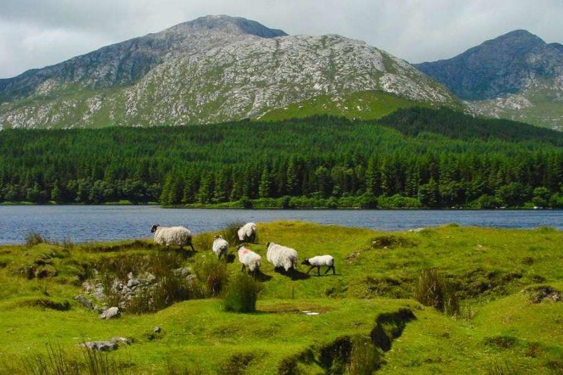 Connemara National Park Natuur in Ierland met Galtic