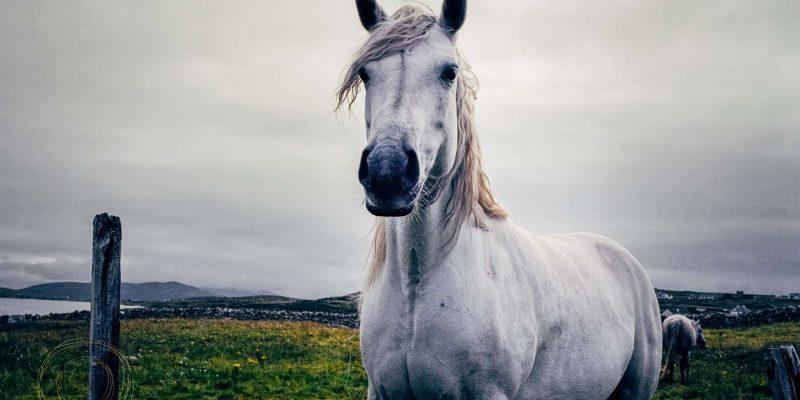 Paard in Ierland Reizen met Galtic