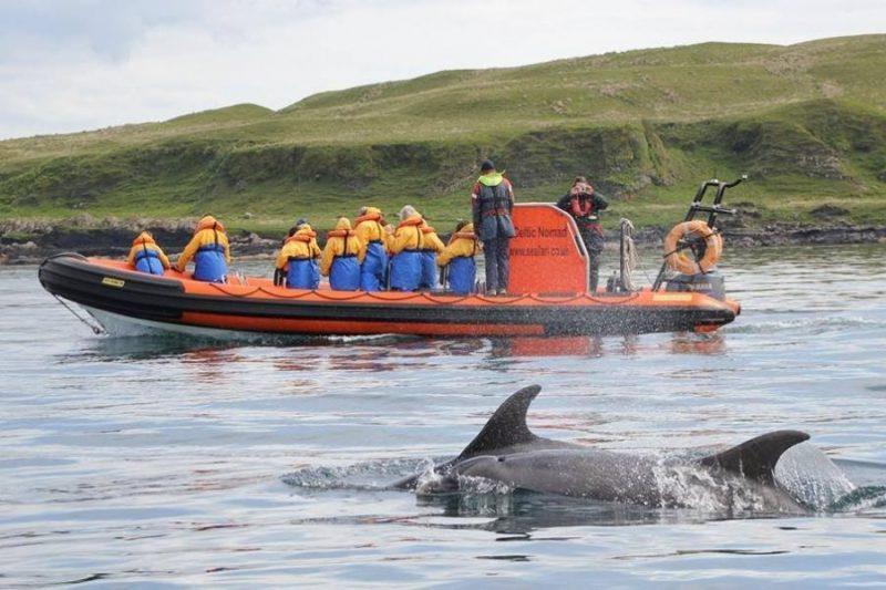 Walvissen, dolfijnen.. Op seafari ontdek je het allemaal.